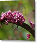 Springtime Forest Pansy Redbud Branch Metal Print
