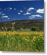 Springtime In Hat Creek Metal Print