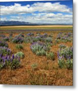 Springtime In Honey Lake Valley Metal Print