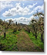 Springtime In The Apple Grove Metal Print