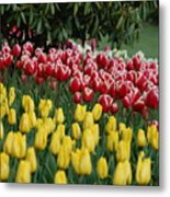Springtime In Washington Metal Print