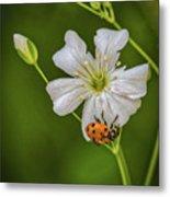 Springtime Ladybug Metal Print