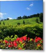 Springtime Landscape Metal Print