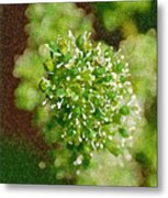 Sprouting Grapes Metal Print
