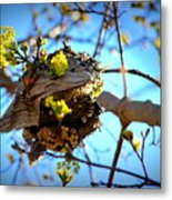 Sprouting Wasp Net Metal Print
