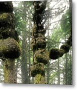 Spruce Burl Olympic National Park Beach 1 Wa Metal Print by Christine Till