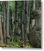 Spruce Burls Olympic National Park Wa Metal Print by Christine Till