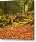 Spruce Logs Leith Hill Surrey 2014 Metal Print