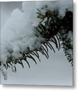 Spruce Needles And Ice Metal Print