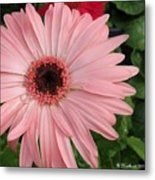 Square Framed Pink Daisy Metal Print
