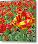 Square Yellow And Red Tulips Metal Print