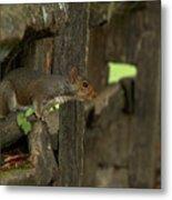 Squatting Squirrel Metal Print