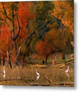 Squaw Creek Egrets Metal Print