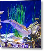 Squid In Monterey Aquarium-california Metal Print