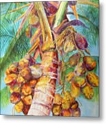 Squire's Coconuts Metal Print