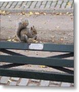 Squirl Nut Salad Metal Print