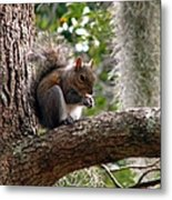 Squirrel 7 Metal Print