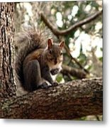 Squirrel 8 Metal Print