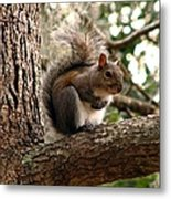 Squirrel 9 Metal Print