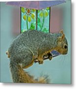 Squirrel At The Bird Feeder Metal Print