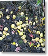 Squirrel Cache In Compost Pile Metal Print