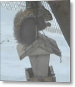 Squirrel Chilling Out Metal Print