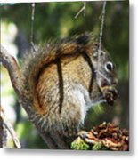 Squirrel Enjoys A Great Meal Metal Print