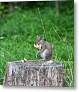Squirrel Having Lunch Metal Print