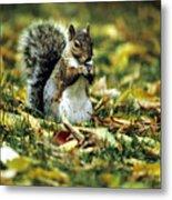 Squirrel In Leaves Metal Print