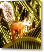 Squirrel In Palm Tree Metal Print