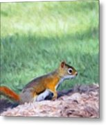 Squirrel In The Park Metal Print