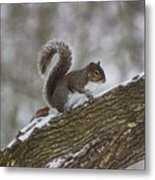 Squirrel In The Snow Metal Print