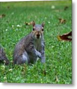 Squirrel Iv Metal Print