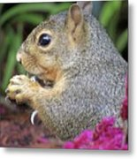 Squirrel - Morning Snack 02 Metal Print