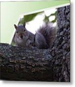 Squirrel On A Limb Metal Print