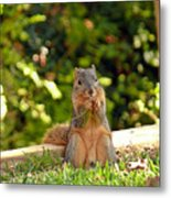 Squirrel On A Log Metal Print