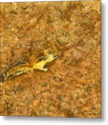 Squirrel On The Ground Metal Print