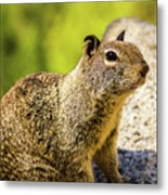 Squirrel On The Rock Metal Print