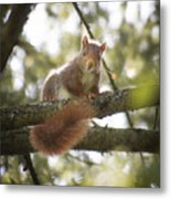 Squirrel On The Spot Metal Print