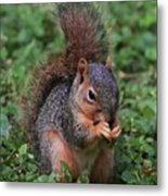 Squirrel Portrait # 3 Metal Print