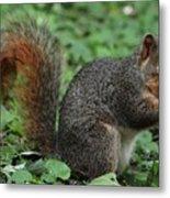 Squirrel Portrait # 6 Metal Print