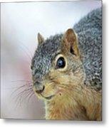 Squirrel Portrait Metal Print
