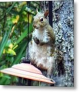 Squirrel Portrait Metal Print