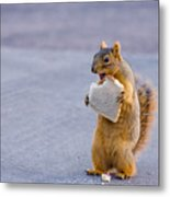 Squirrel Sandwich Metal Print