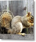 Squirrel - Snack Time Metal Print
