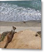 Squirrel Soaking In The Ocean View   Metal Print