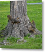 Squirrel Tag Metal Print