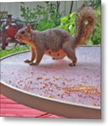 Squirrel Visits Me Metal Print