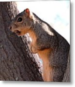 Squirrel With A Nut Metal Print