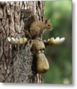 Squirrelly Thoughts Metal Print